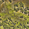 Forest-creek channels aerial