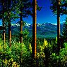 Elkhorn Mountains - Pine & Larch forest